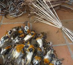 horror shows 25 million birds butchered