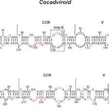 bureau udes structure tamara giguère bsc in biochemistry université de sherbrooke
