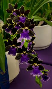 orchids flowers 1268 best orchid images on flowers pretty