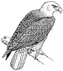 articles birdhouse coloring pages adults tag bird