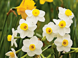 spring flower plantageddon what to do to protect your spring flowers from frost