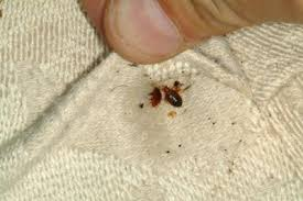 Bed Bugs In Mattress Uk Research Bed Bugs U0027bite U0027 The Wallet Of Hotel Owners Uk