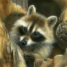 mis laminas para decoupage raccoons racoon and animal