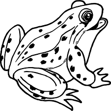 frogs coloring pages frog holding flower page of a tree picture