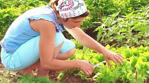 easy way to grow vegetable garden go green youtube
