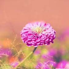google images flower garden flower hd desktop wallpaper widescreen high definition