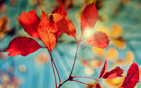 wallpapers tagged with autumn autumn hd wallpapers page 2