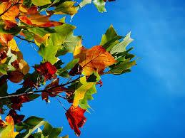 free photo autumn fall leaves leaves free image on pixabay