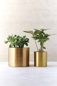 office design small plants for office small plants for office