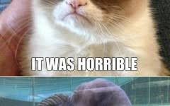 Make Your Own Cat Meme - angry cat meme make your own about angry cat meme pinterest