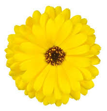 yellow flowers pattern weights flowers yellow flowers pattern weights