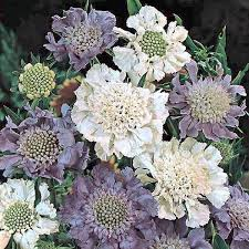 57 best cut flowers garden look images on pinterest cut