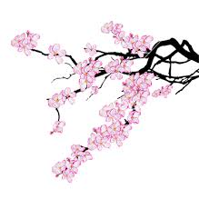 branch of cherry tree vector 746959 by tanais on vectorstock