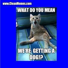 Clean Cat Memes - cat memes clean memes the best the most online page 13