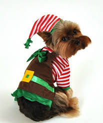 Elf Costume Halloween Santa U0027s Lil Elf Helper Christmas Dog Costume Babies