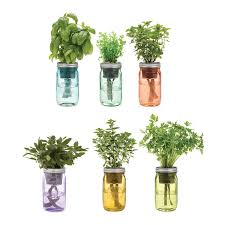 Indoor Spice Garden by Mason Jar Indoor Herb Garden Grow Your Own Herbs Uncommongoods