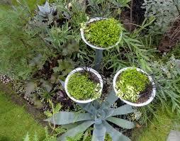danger garden new dish planters for the season u0027s change