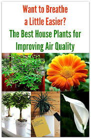 best plants for air quality want to breathe a little easier the best house plants for improving