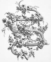 snake and roses 1762 photograph by granger