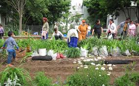 gardening picture syracuse grows community gardening u0026 urban agriculture