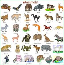 learn english vocabulary through pictures 100 animals names
