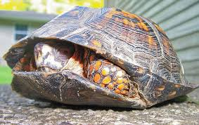 fun turtle facts kids