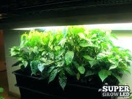 250 watt hid grow lights 250 watt grow light elegant watt hid grow light or chilies under
