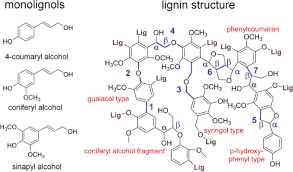 electrochemical lignin degradation in ionic liquids on ternary