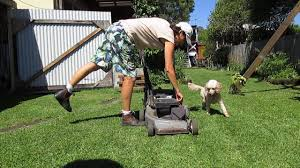 how to stop dog lawn mower excitement youtube