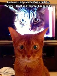 Funny Memes Cats - top 25 funny cat memes cutest cats