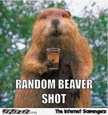 Random Funny Memes - random beaver shot funny meme pmslweb
