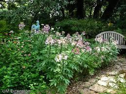 grow it eat it surprise ornamentals in the vegetable garden