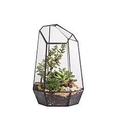large terrarium containers amazon com
