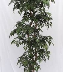buy ming silk aralia 4 foot tree custom made on
