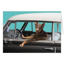 doberman cards greeting photo cards zazzle