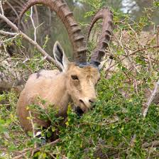 New Mexico wildlife images Hunting fees in new mexico usa today jpg