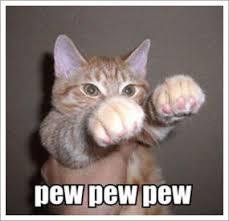 Lol Cat Meme - lolcat friday i am kio