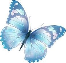 free pictures of butterflies clipart best butterflies