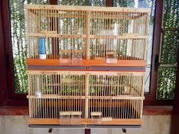 gabbie per costruire gabbie in legno per allevamento uccelli curiosità web