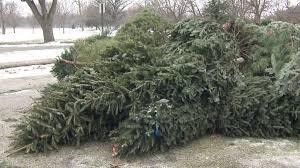 dispose of christmas tree christmas lights decoration