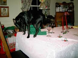 Dogs At Dinner Table Archive Billlawrenceonline
