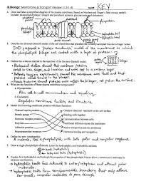 Cell Transport Skills Worksheet Answers Cell Membrane Transport Review Key 1 3 1 4