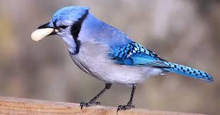 backyard birds u0027 favorite bird seed