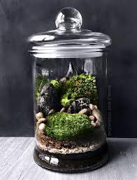 the 25 best large terrarium ideas on pinterest large outdoor
