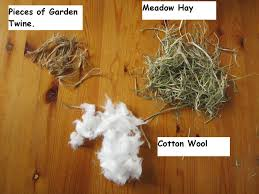 rabbit material the balcony blues nesting materials tails of wildlife