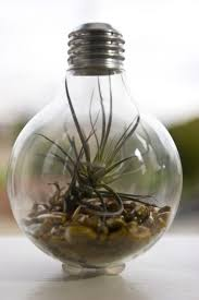 plant stand outstanding light bulb plant holders photos design