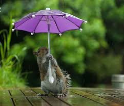 adorable photography of squirrel with tiny umbrella to protect