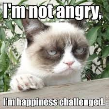 Angry Cat No Meme - 30 very funny grumpy cat meme pictures and photos