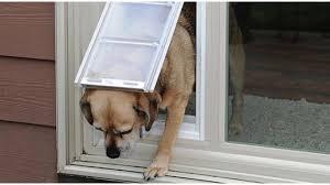 sliding glass doggie doors sliding glass pet door how to measure your pet advanced window