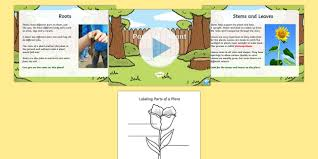 of a plant task setter activity powerpoint with worksheet